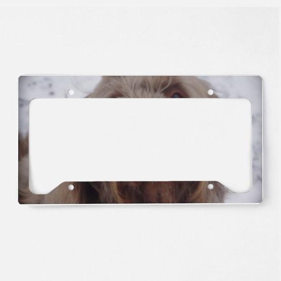 labradoodle 3 License Plate Holder