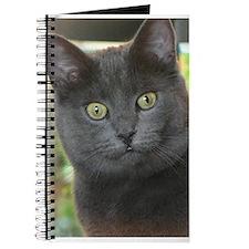 Mez-purr-eyezed Journal