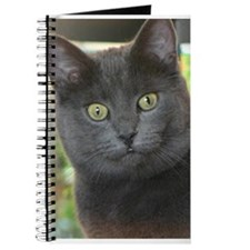 Mez-purr-eyezed Journal