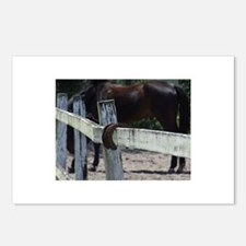 Cool Neglected horse Postcards (Package of 8)