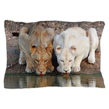 Lions Pillow Case