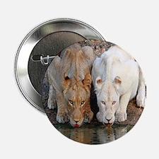 """Lions 2.25"""" Button"""