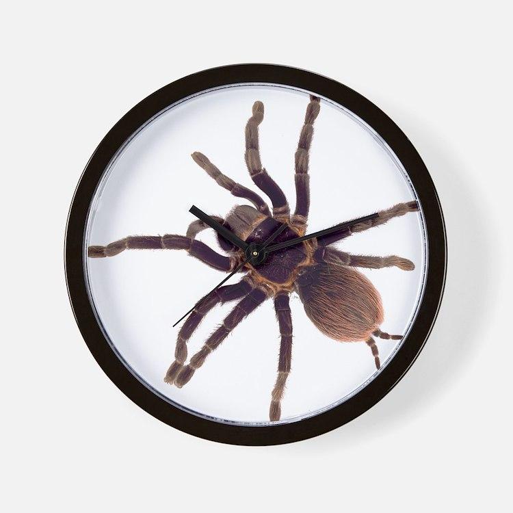 Hairy Brown Tarantula Wall Clock