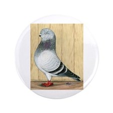 "Canadian Show Tippler Pigeon In Blue 3.5"" But"