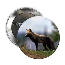 Cross Fox Button