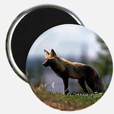 Cross Fox Magnet