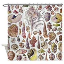 Vintage Haeckel Sea Shell Shower Curtain