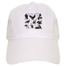 Vultures of the World Baseball Cap