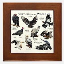 Vultures of the World Framed Tile