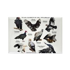 Vultures of the World Rectangle Magnet
