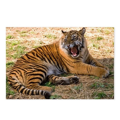 Roaring Tiger Postcards (Package of 8)