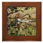 Merganser Family Framed Tile