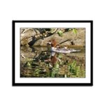Merganser Family Framed Panel Print