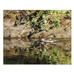 Merganser Family Posters Small Poster