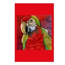 Scarlet Red Macaw Postcards (Package of 8)