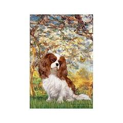 Spring & Cavalier Rectangle Magnet (10 pack)