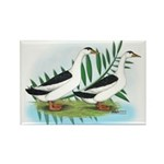 Magpie Drake and Duck Rectangle Magnet (10 pack)