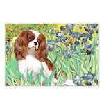 Irises & Cavalier Postcards (Package of 8)