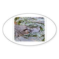 Duck Billed Platypus AF263D-012 Decal