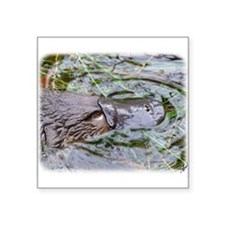 "Duck Billed Platypus AF263D Square Sticker 3"" x 3"""