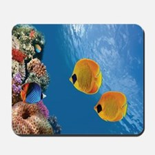 Coral Colony Mousepad