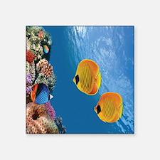 Coral Colony Sticker