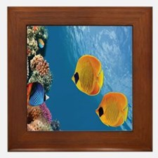Coral Colony Framed Tile