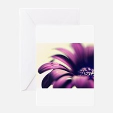 PURPLE GERBERA w WATER DROPLET Greeting Cards