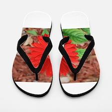 GERBERA [5] Flip Flops