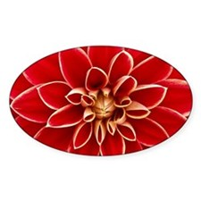 Red Dahlia Closeup Decal