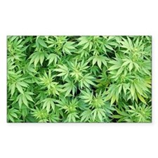 Marijuana Plant Decal