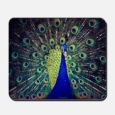 Cobalt Blue Peacock Mousepad