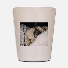 Sleepy Pug Shot Glass
