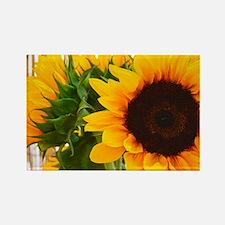 Sunflower III Rectangle Magnet