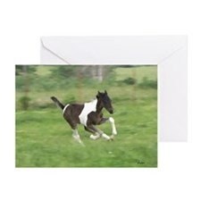Running Foal Greeting Cards (Pk of 10)
