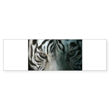 tiger eyes Bumper Sticker