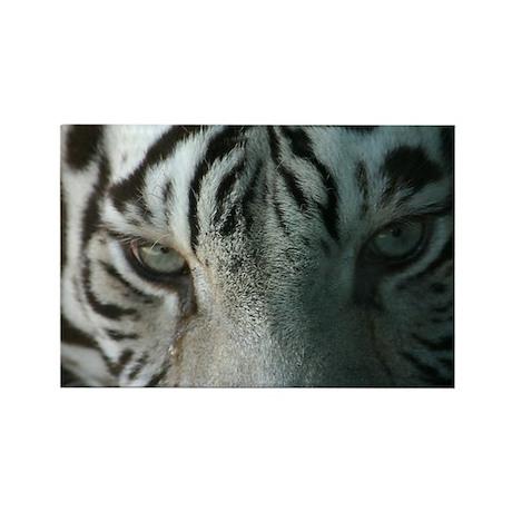 tiger eyes Rectangle Magnet