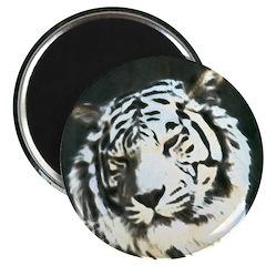 tiger back lit 2.25