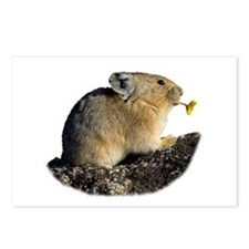 Cool Wild rabbit Postcards (Package of 8)