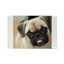 Pugsley The Pug Magnets