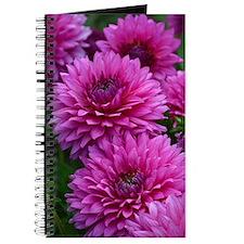 Purple dahlia flowers Journal