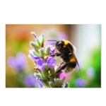 Humble Bumblebee Postcards (Package of 8)