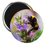 Humble Bumblebee 2.25