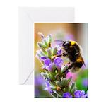 Humble Bumblebee Greeting Cards (Pk of 10)