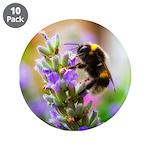 Humble Bumblebee 3.5