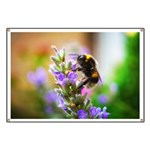 Humble Bumblebee Banner