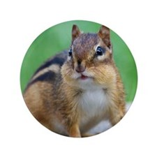 "Cute Chipmunks 3.5"" Button (100 pack)"
