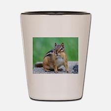 Cool Chipmunk Shot Glass