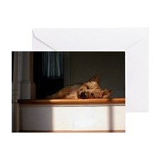 Cairn Terrier In The Sun Greeting Cards
