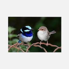 Blue Fairy Wrens Rectangle Magnet